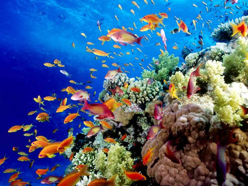 KS3 Australasia - The Great Barrier Reef