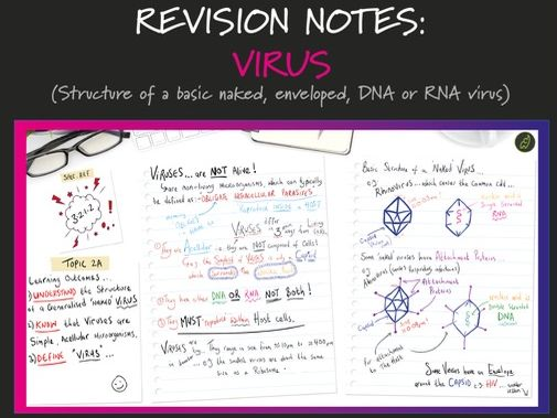 A Level Biology: Virus Structure (Topic 2A 3.2.1.2 AQA)
