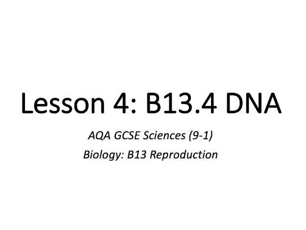 B13.4 DNA