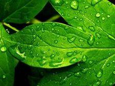 A Level Biology - Transpiration