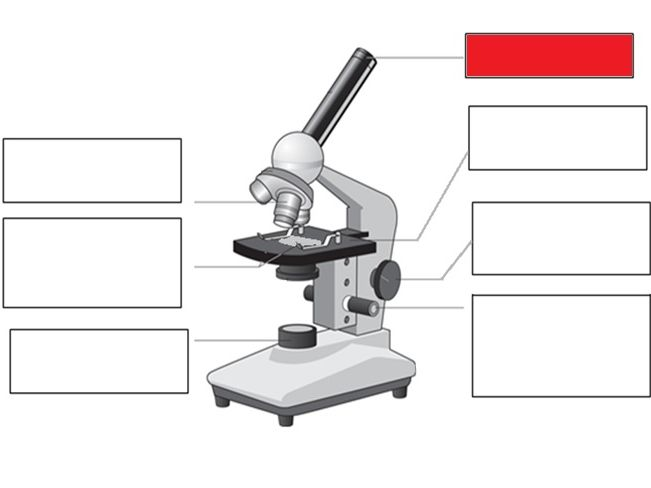 Topic 1 Biology AQA trilogy