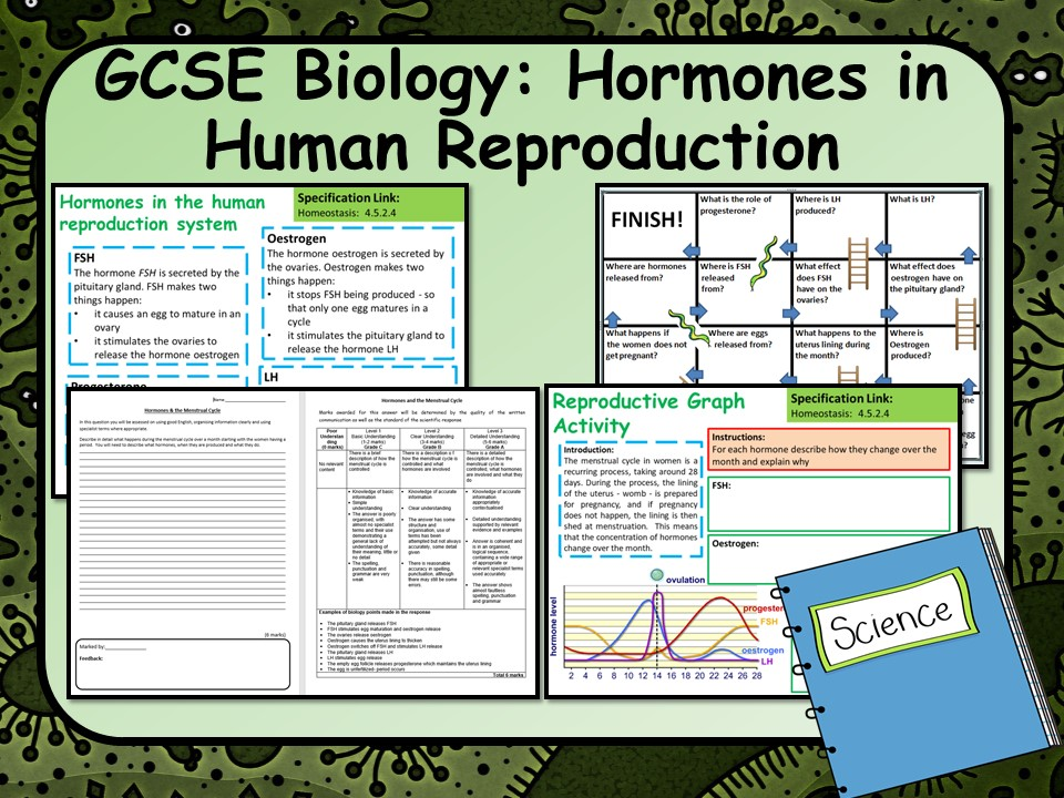 AQA GCSE Biology  (Science) Hormones in Human Reproduction Lesson