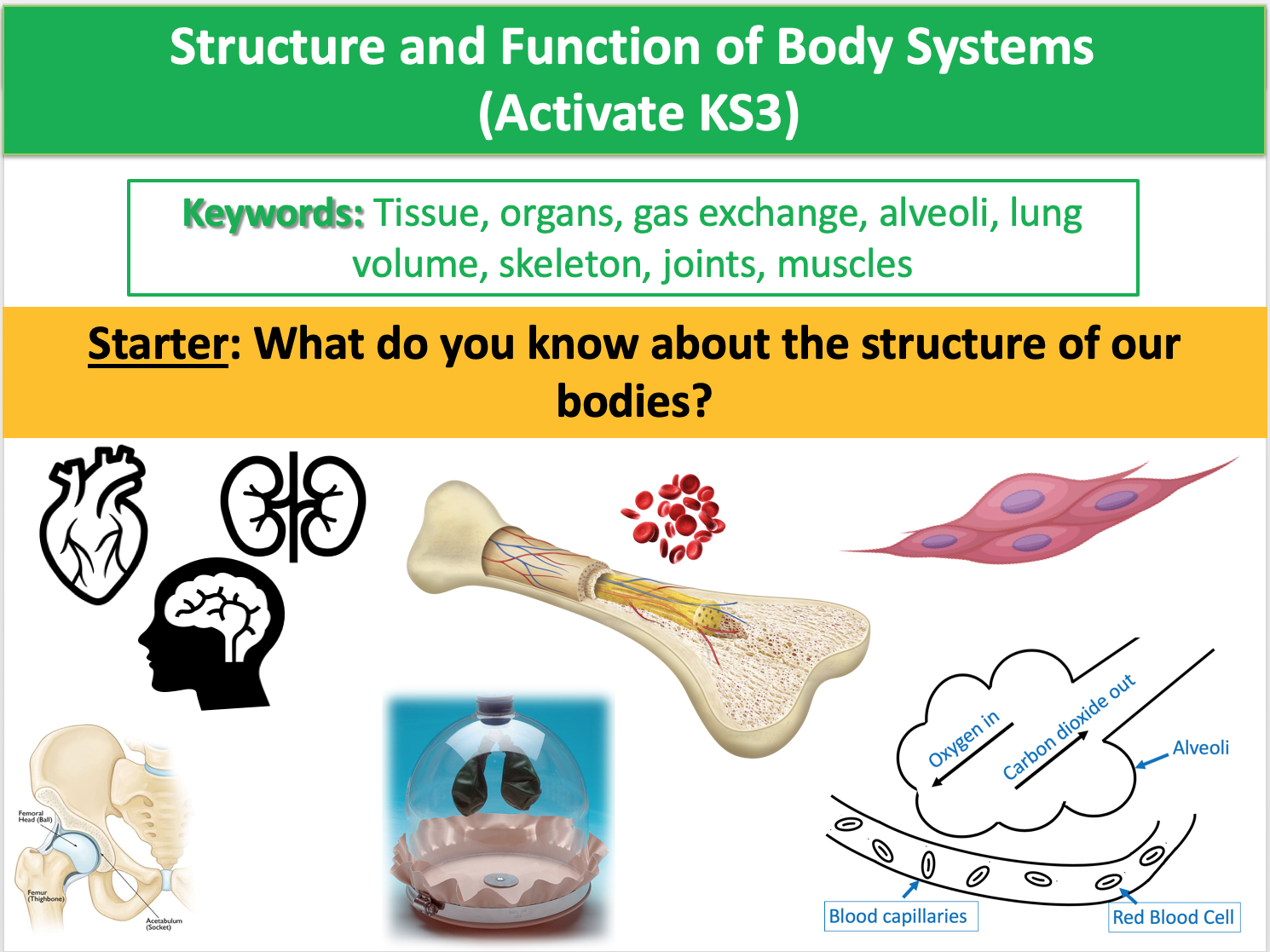 Structure and Function of Body Systems (Activate KS3)