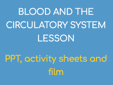 BLOOD & THE CIRCULATORY SYSTEM LESSON