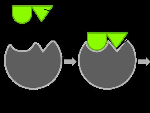 enzyme practical Enzyme assay beckman du640 uv/vis spectrophotometer enzyme assays are the si unit is katal kg −1, but a more practical unit is μmol mg −1 min −1.