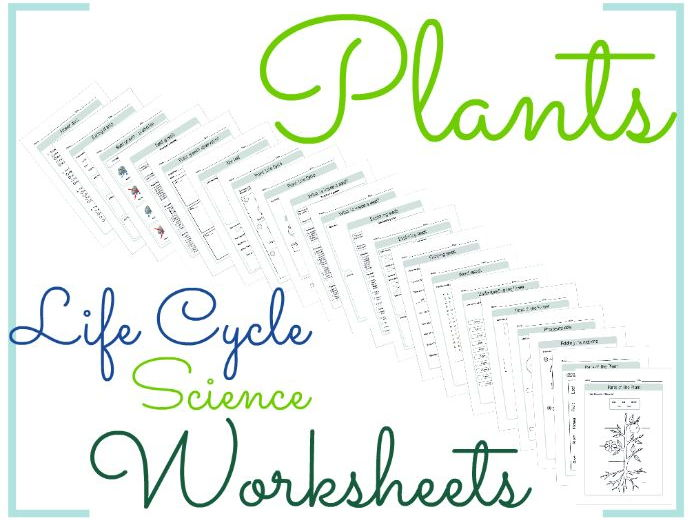 Plants Life Cycle Science Worksheets by BioGeoScience Teaching – Plant Life Cycle Worksheet