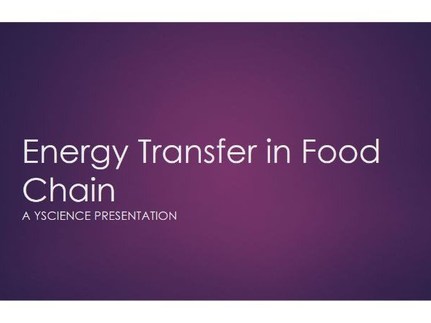 Energy Transfer in the Food chain - full edition