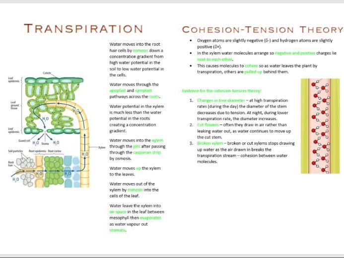 Transport in Plants Booklet AS Biology OCR