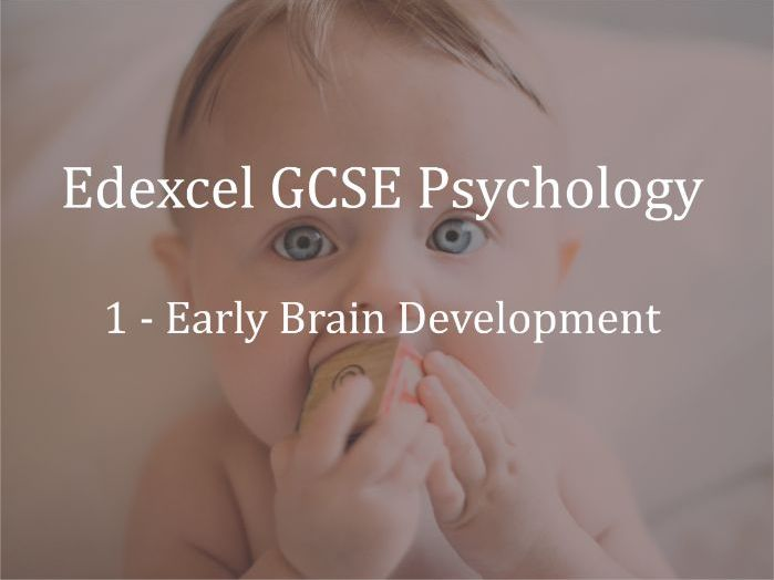 Edexcel GCSE Psychology Lecture 1 - Early Brain Development