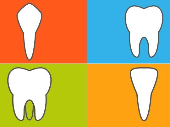 Identify different kinds of teeth.