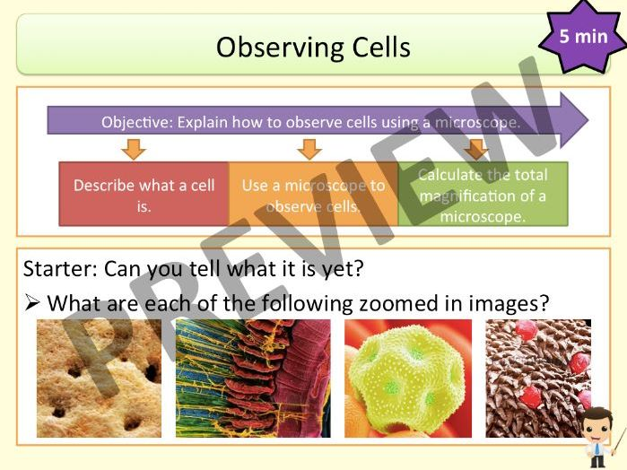Cells: Observing Cells (KS3 Activate)