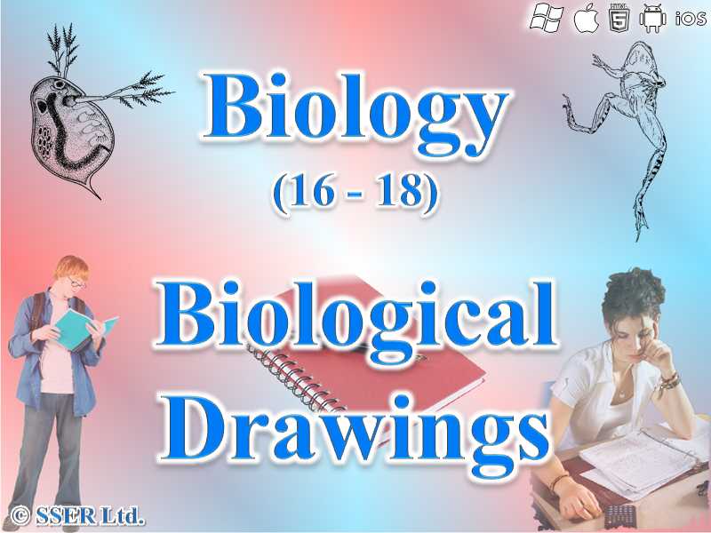 3.2.1.3 Biological Drawings - Cells, Tissues & Whole Specimens
