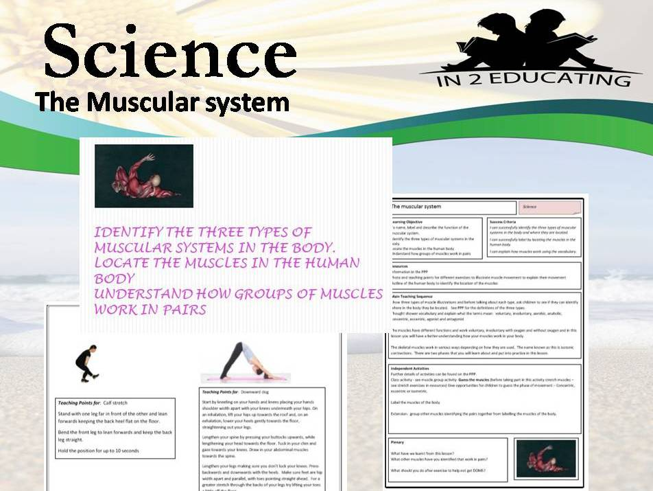 KS 2 Science muscular system lesson