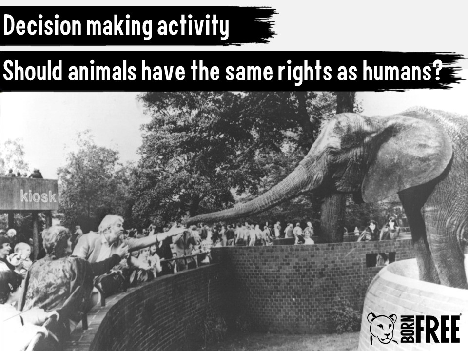 Decision Making Exercise – Should animals have the same rights as humans?