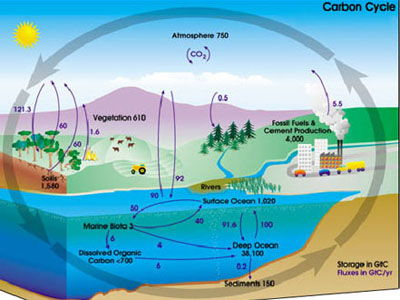 CB9 Edexcel: Lesson 11 - carbon cycle