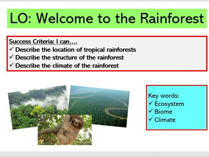 L1. Welcome to the Rainforest