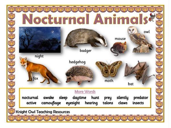Nocturnal Animals Word Mat