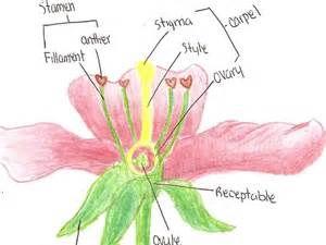 IGCSE Preparation bundle Plant reproduction