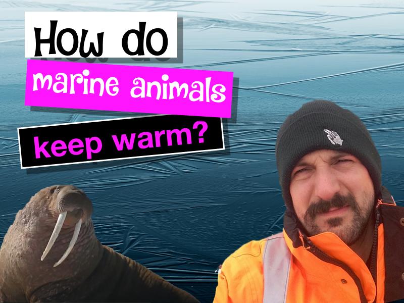 How do marine animals keep warm?