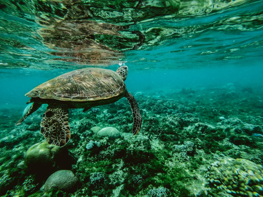 great barrier reef environmental issues global warming geography lesson AQA OCR edexcel 1-9