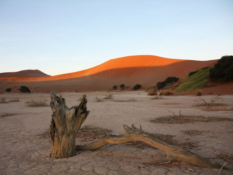 Desertification, Causes of desertification in the Sahal