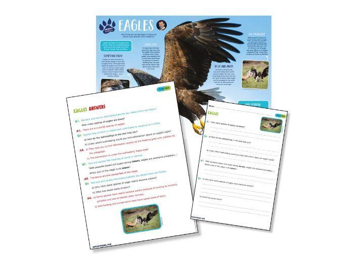 Eagles reading comprehension
