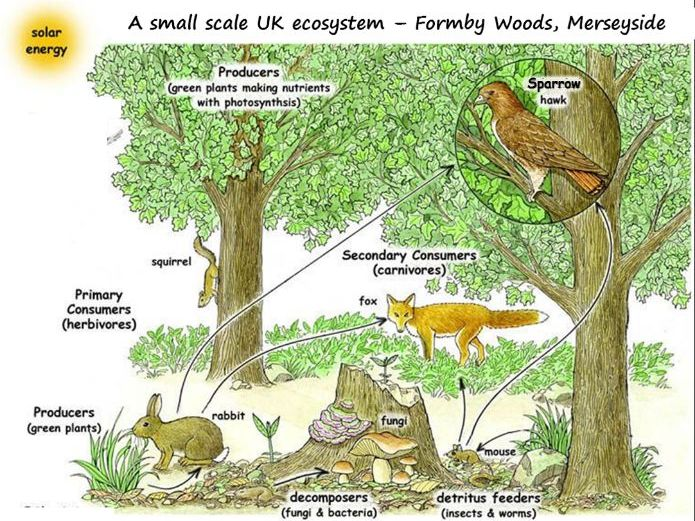 Small Scale UK Ecosystem - Formby Woods, Merseyside