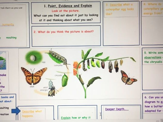 Lifecycle of a Butterfly POINT EVIDENCE EXPLAIN MAT
