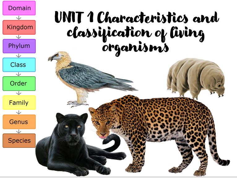 KS4 Classification of living organisms
