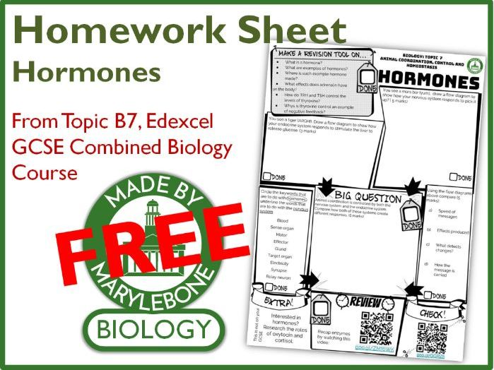 Homework Sheet - Hormones (Edexcel GCSE 9-1 Combined Biology Topic 7)