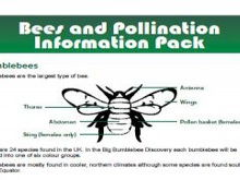 Bees and pollination information pack