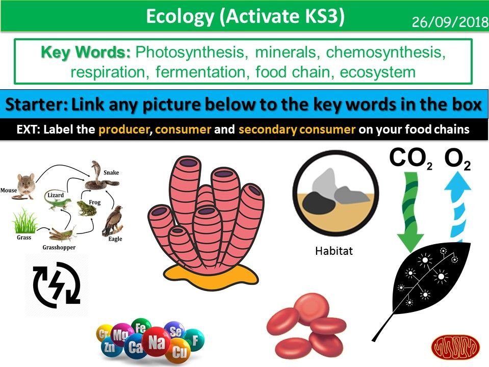 Ecology (Activate KS3)