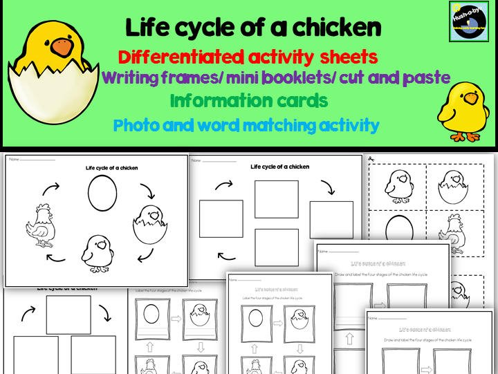 Life Cycle Of A Chicken Pack by janedonlan1 Teaching Resources Tes – Chicken Life Cycle Worksheet
