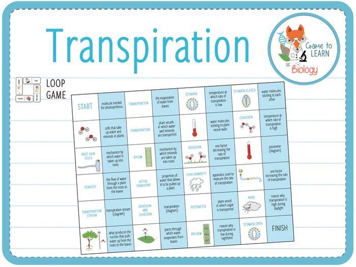 Transpiration - Loop game (KS4/5)