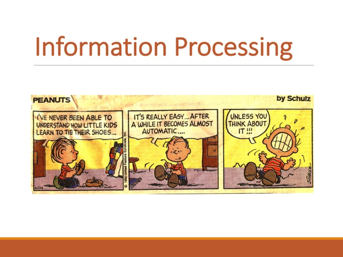 PE GCSE Sports Psychology (Information Processing)