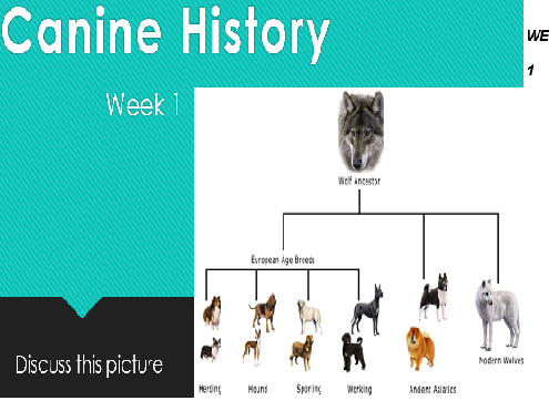 The Relationship of Canine and Man throughout History - A Dog's Life/Journey