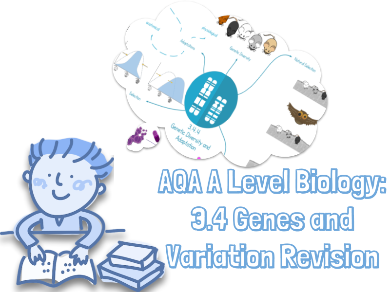 NEW AQA A level Biology 3.4 Genetic information and Variation revision diagrams