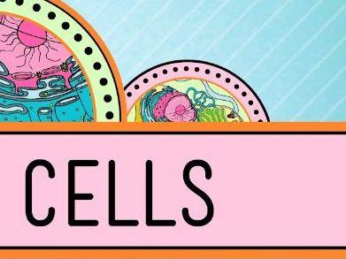 GCSE Biology B1 Cells Revision Spread