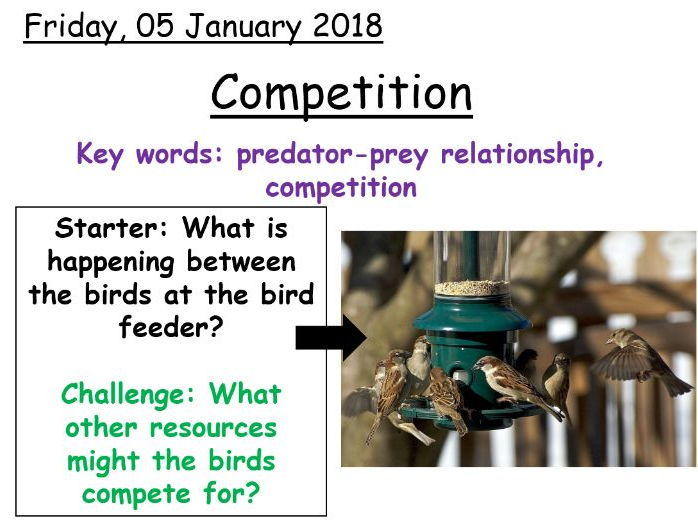 Year 7 Competition in ecosystems