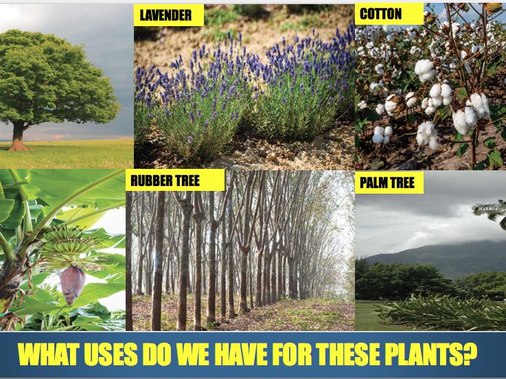 importance of plants