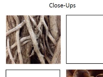 Close-Ups Homework Worksheet