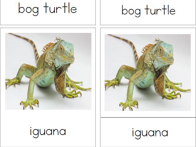Reptiles - Montessori 3-Part Cards