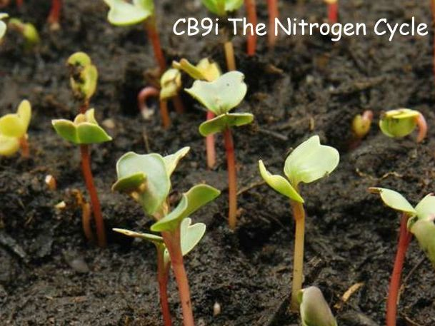 CB9i The Nitrogen Cycle (EDEXCEL GCSE)