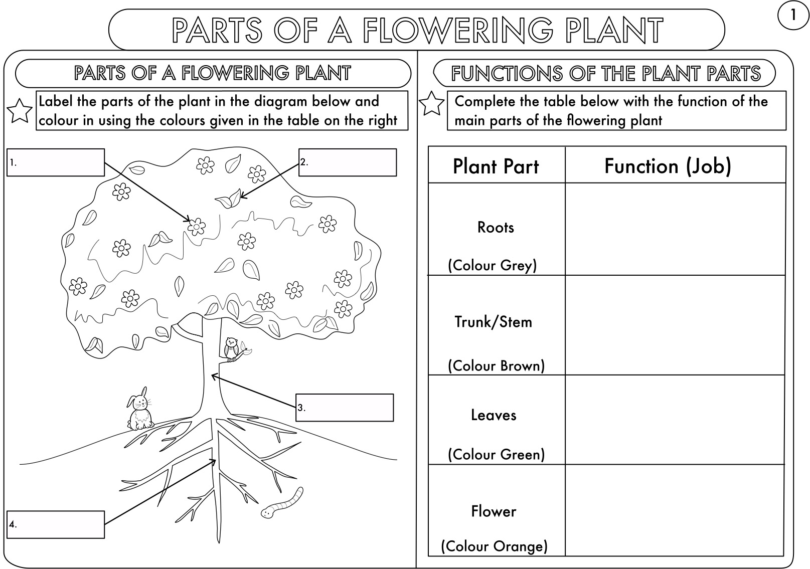 Worksheets Parts Of A Flower Worksheet year 3 and 4 science worksheets with complimentary posters by beckystoke teaching resources tes
