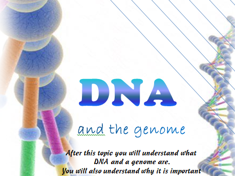 B13.4 DNA and the Genome   Foldable