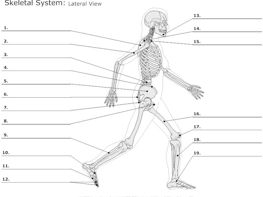 cover image - Skeletal System Worksheet