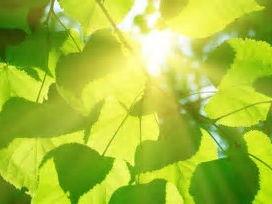 KS3 Plant nutrition (Photosynthesis)