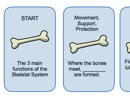Physical Education: Skeletal System & Injuries Worksheet & Activity