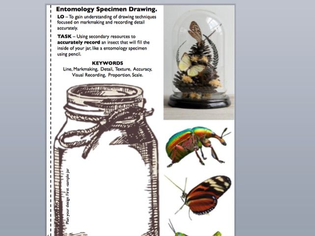 Entomology Insect Lesson / Draw the insect in the jar