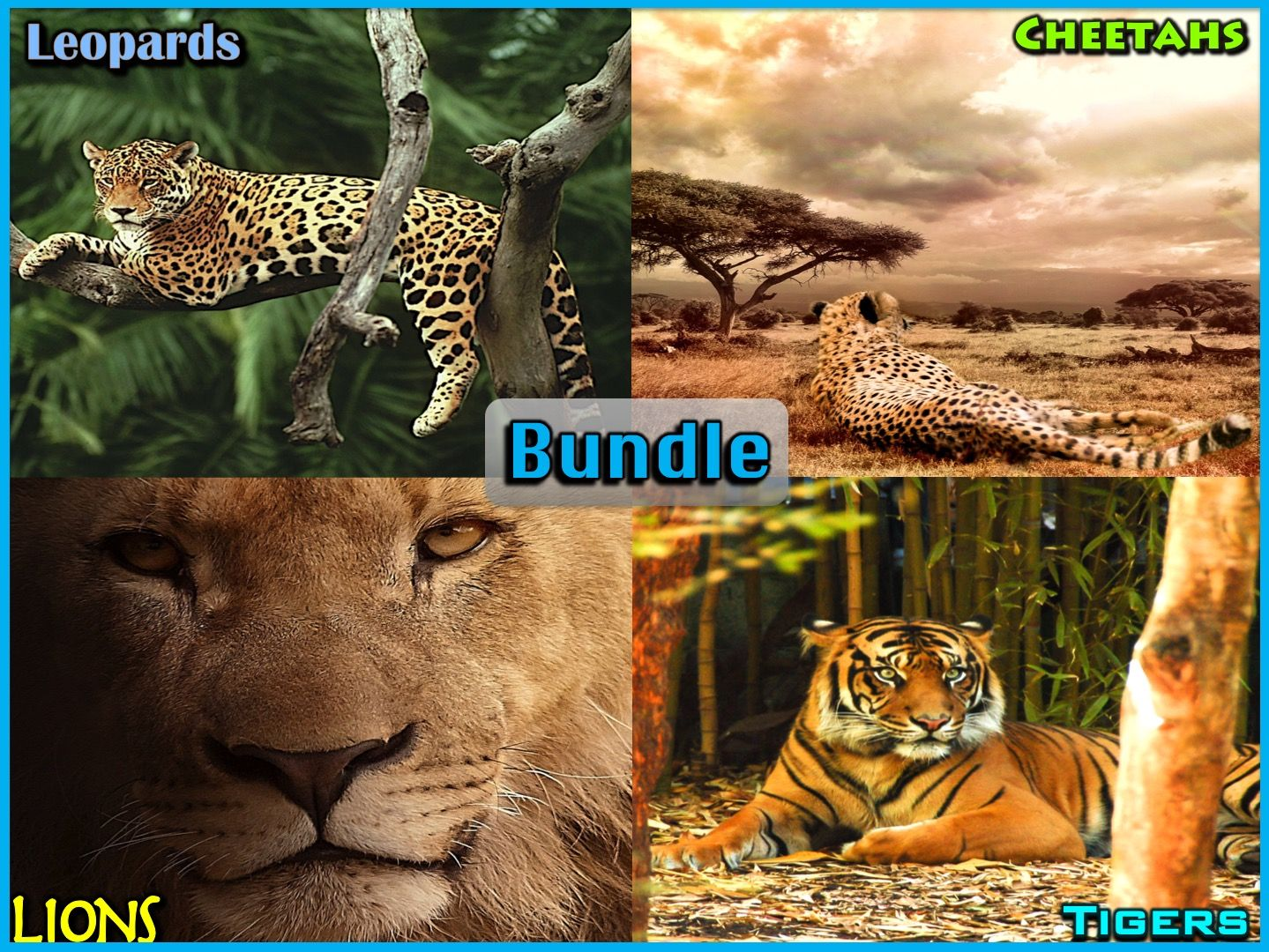 Big Cats - PowerPoint and Activities Bundle